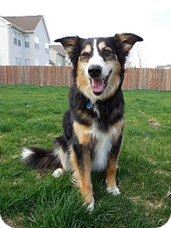 Anatolian Shepherd Mix Dog for adoption in Washington, Illinois - Casey