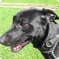 Adopt A Pet :: JACK - Coudersport, PA