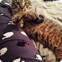 Adopt A Pet :: Chaz - Vancouver, BC