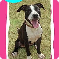 Adopt A Pet :: Pearl - Hillsboro, TX
