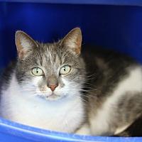 Adopt A Pet :: Simone - Mebane, NC