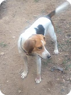 Treeing Walker Coonhound Mix Dog for adoption in Union Grove, Wisconsin - Emma