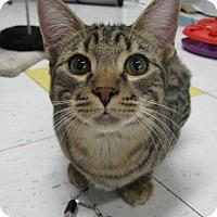 Adopt A Pet :: SIMBA - Brea, CA