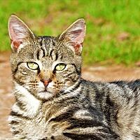 Adopt A Pet :: Kevin - Washington, GA