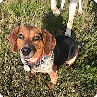 Adopt A Pet :: Mrs. Yarma Chubbs - Knoxville, TN