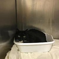 Adopt A Pet :: Peony - Santa Paula, CA
