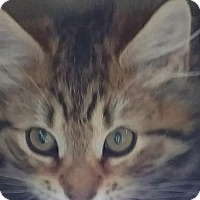 Adopt A Pet :: Bob Bentley - Jackson, NJ