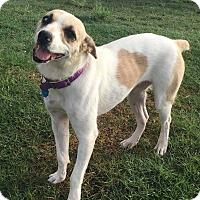 Adopt A Pet :: Daisy: adoption pending - Astoria, NY