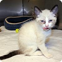 Adopt A Pet :: Marie - Lumberton, NC