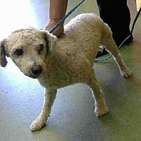 Adopt A Pet :: URGENT on 8/11@DEVORE San Bern - San Bernardino, CA