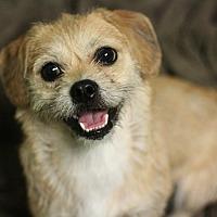 Adopt A Pet :: Anna - Canoga Park, CA