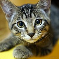 Adopt A Pet :: Bobby Ray - Tucson, AZ