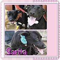 Adopt A Pet :: Sarita - Toa Alta, PR