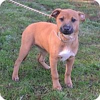 Adopt A Pet :: Slim - Athens, GA