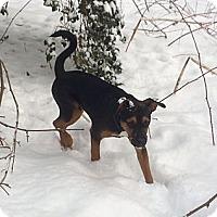 Adopt A Pet :: Brody - South Jersey, NJ