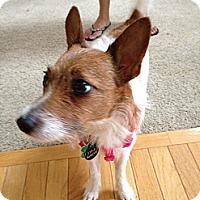 Adopt A Pet :: Cassi - Hilliard, OH