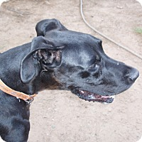 Adopt A Pet :: Phoenix - Phoenix, AZ