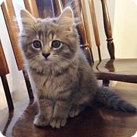 Adopt A Pet :: Asparagus - Byron Center, MI