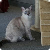 Adopt A Pet :: Faith - Walla Walla, WA