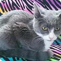 Adopt A Pet :: Jonah - Farmington, AR
