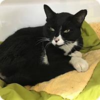 Adopt A Pet :: Boris - Orleans, VT