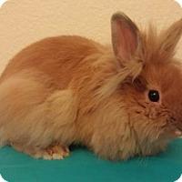 Adopt A Pet :: Cobain - Paramount, CA