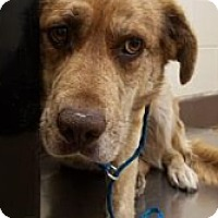 Adopt A Pet :: 167400 @ Apple Valley - Beverly Hills, CA