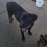 Adopt A Pet :: Janet - Manchester, NH