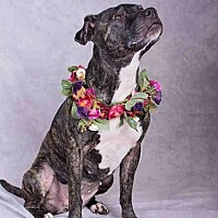 Adopt A Pet :: KISSES - Salt Lake City, UT