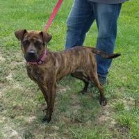 Adopt A Pet :: WENDY - Clinton, NC
