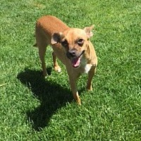 Adopt A Pet :: Azalea - Henderson, NV
