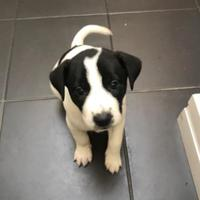 Adopt A Pet :: Thyme - Denver, CO