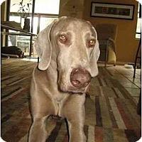 Adopt A Pet :: Roco *Adoption Pending* - Eustis, FL