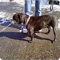 Adopt A Pet :: Guiness - Winder, GA