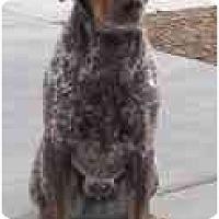 Adopt A Pet :: Conner - Las Vegas, NV
