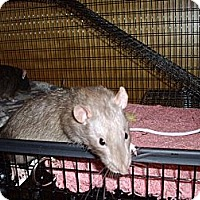 Adopt A Pet :: Quatro - Greenwood, MI