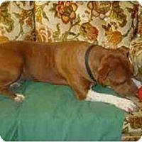Adopt A Pet :: Honey AKA Pipa - Clovis, CA