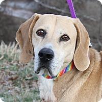 Adopt A Pet :: Chester (Neutered) - Marietta, OH