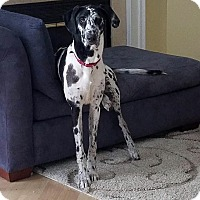 Adopt A Pet :: Jade - Stevens Point, WI
