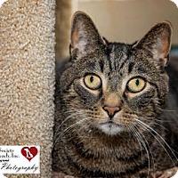 Adopt A Pet :: Kiana - North Myrtle Beach, SC