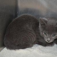Adopt A Pet :: Doyle - Cambridge, MD