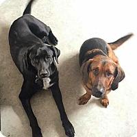 Adopt A Pet :: mr Fritz - Daleville, AL