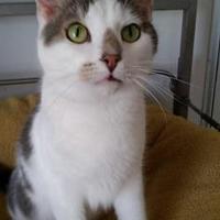 Adopt A Pet :: Farley - Shelbyville, KY