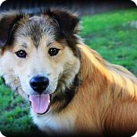 Adopt A Pet :: Tommy - Huntington Woods, MI