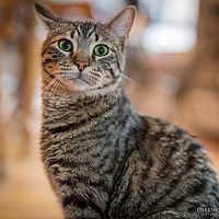 Adopt A Pet :: Goop - St. Louis, MO