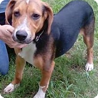 Adopt A Pet :: Lucky B - Orlando, FL