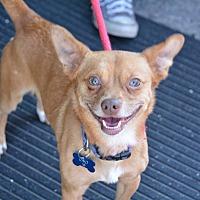 Adopt A Pet :: Oso - Lafayette, IN