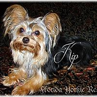 Adopt A Pet :: Kip - Palm City, FL