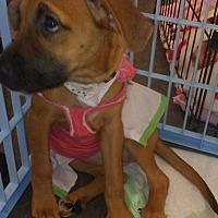 Adopt A Pet :: Mela - SOUTHINGTON, CT