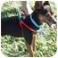 Photo 3 - Miniature Pinscher Mix Dog for adoption in Los Angeles, California - Lolita (Lucy)